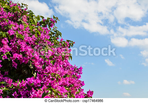 Bunch Of Purple Tropical Flowers Stock Photo