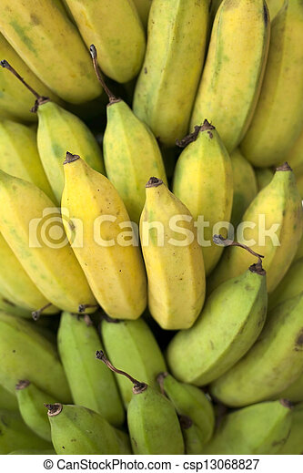 Bunch of ripening bananas on tree - csp13068827