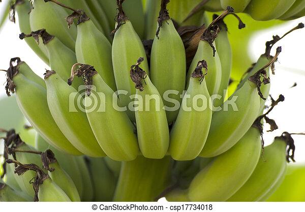 Bunch of ripening bananas - csp17734018
