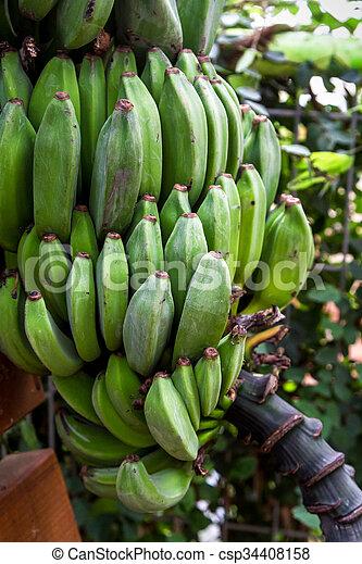 Bunch of ripening bananas - csp34408158