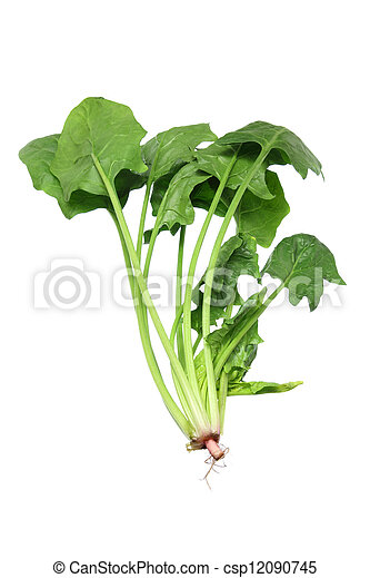 Bunch of Spinach - csp12090745