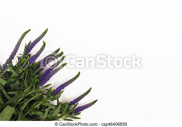 Bunch of veronica flowers isolated on white background stock photos bunch of veronica flowers isolated on white background csp46406839 mightylinksfo
