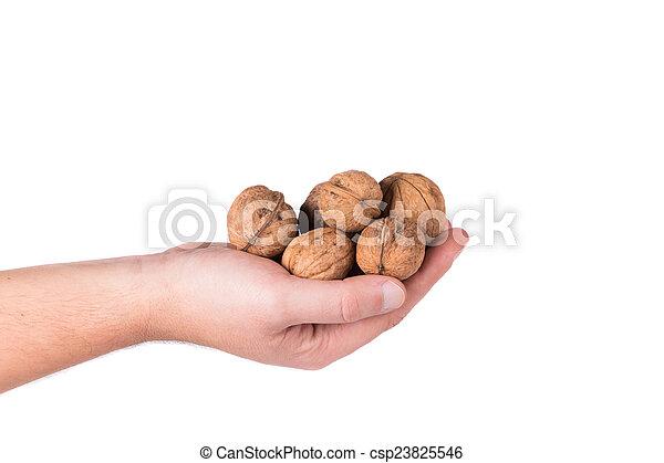 Bunch of walnuts in hands. - csp23825546