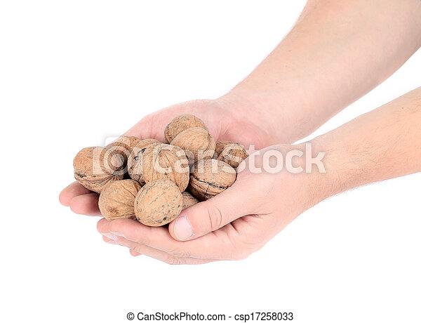 Bunch of walnuts in hands. - csp17258033