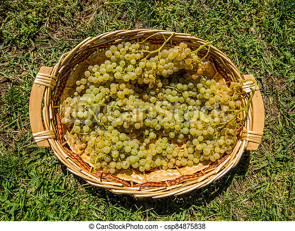Bunches of grapes - csp84875838