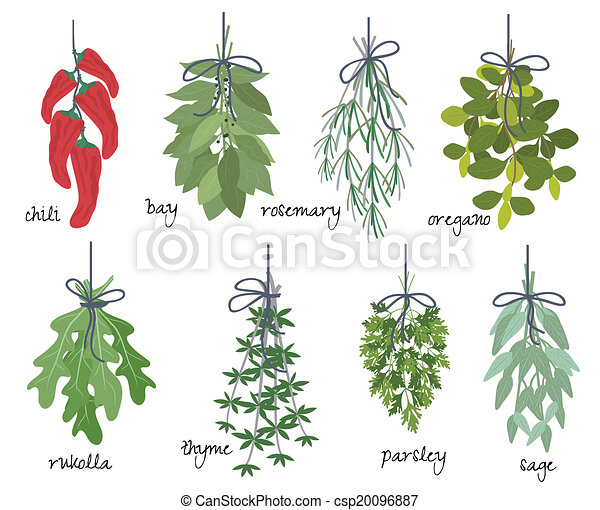 Bunches of medicinal aromatic herbs - csp20096887