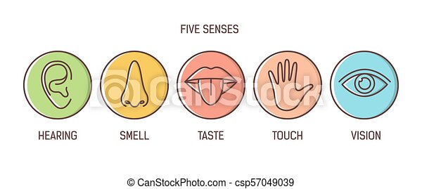 Bundle of 5 senses - hearing, smell, taste, touch, vision. Set of human sensory organs drawn with outlines inside colorful circles. Bright colored vector illustration in modern line art style. - csp57049039