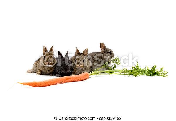 Bunnies and a Carrot - csp0359192