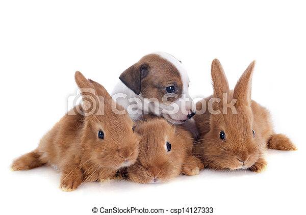 bunnies and puppy - csp14127333