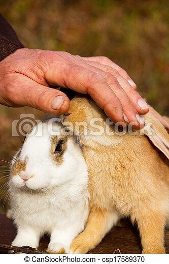 Bunnies - csp17589370