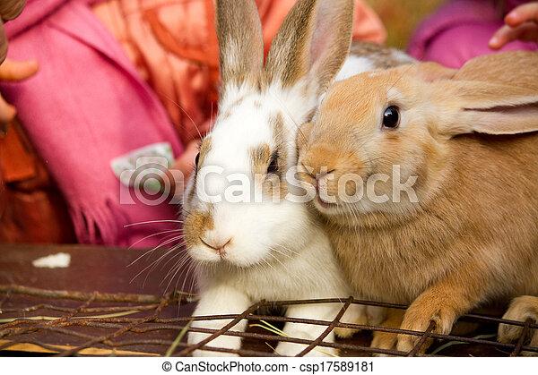 Bunnies - csp17589181