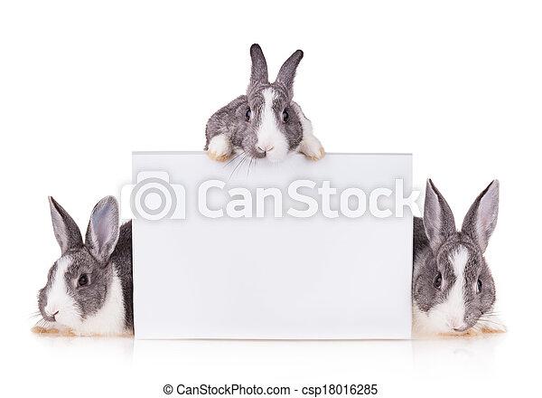 Bunnies - csp18016285