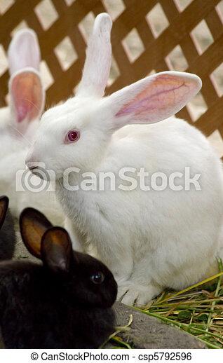 Bunnies - csp5792596