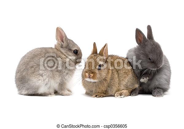 Bunnies - csp0356605