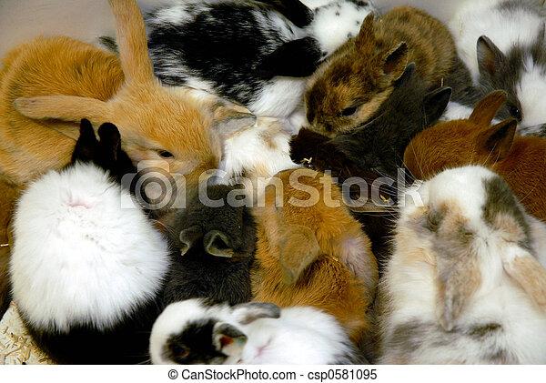 bunnies - csp0581095