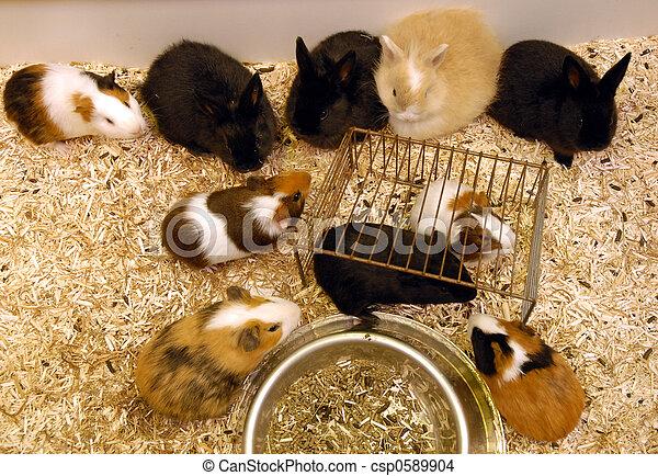bunnies  - csp0589904