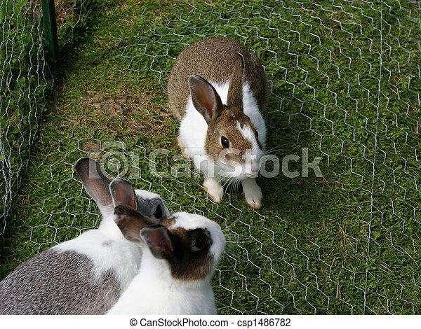 Bunnies - csp1486782