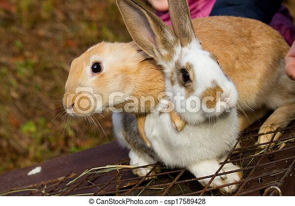 Bunnies - csp17589428