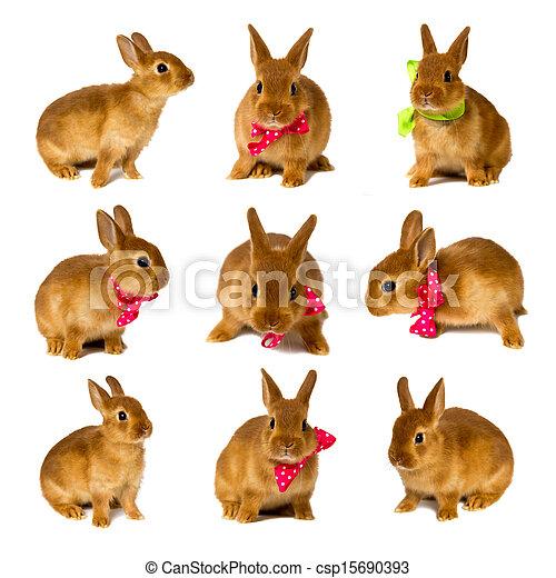 bunnies - csp15690393