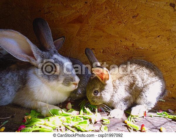 Bunnies - csp31997092