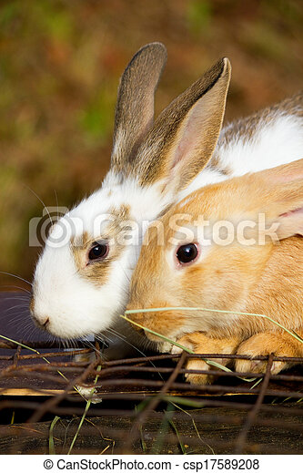 Bunnies - csp17589208