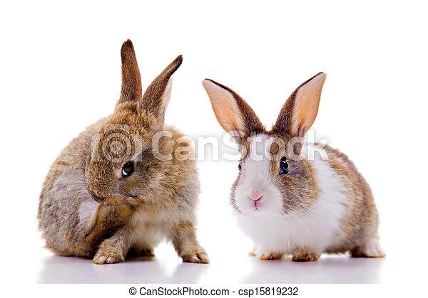 Bunnies - csp15819232