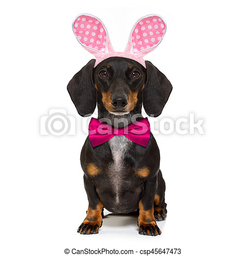 bunny easter ears dog - csp45647473