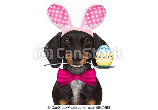 bunny easter ears dog - csp45647463