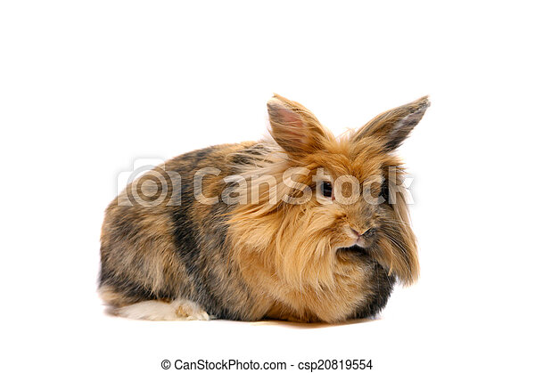 Bunny on the white background - csp20819554