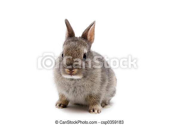 Bunny - csp0359183