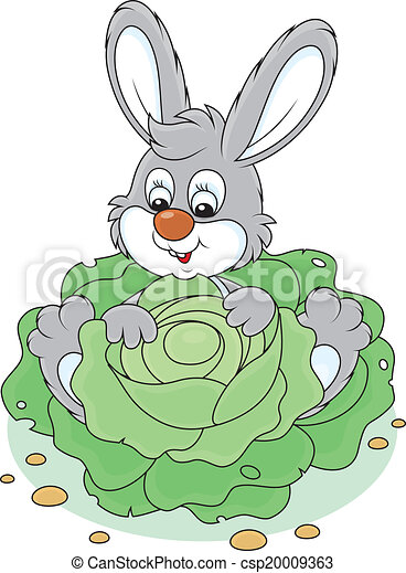 Bunny with a cabbage - csp20009363