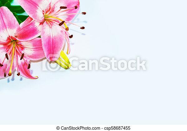 bunte, hell, hintergrund., flowers., blumen-, lilie - csp58687455