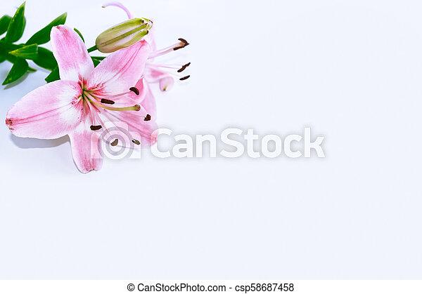 bunte, hell, hintergrund., flowers., blumen-, lilie - csp58687458