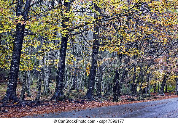 Farbige Herbstbäume auf einer windigen Landstraße - csp17596177
