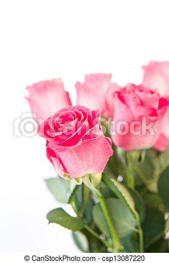 buquet, rosas cor-de-rosa - csp13087220