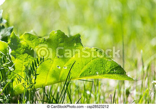 burdock leaf grass in nature - csp28523212
