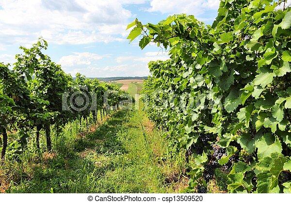 Burgenland - csp13509520