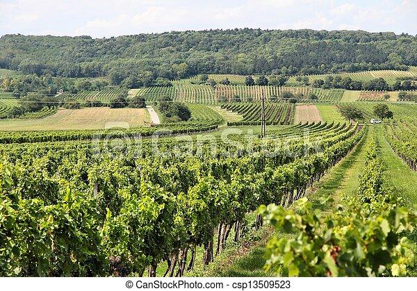 Burgenland vineyard - csp13509523