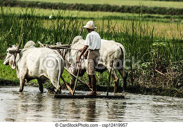 Burma. Farmer on his Rice Field  - csp12419957