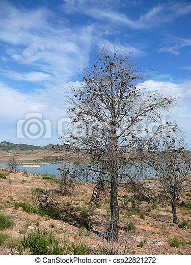 Burned Pine Tree - csp22821272