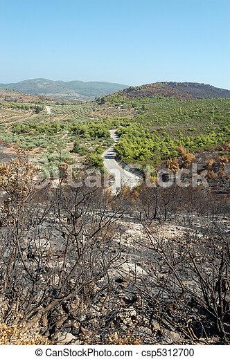burned trees - csp5312700