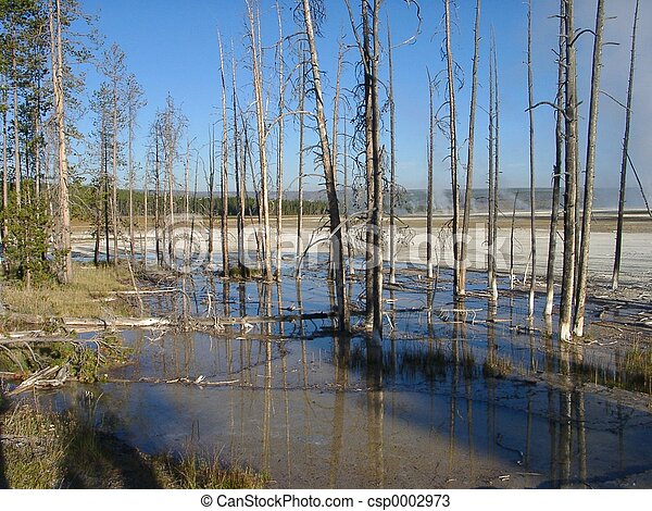 Burned trees - csp0002973
