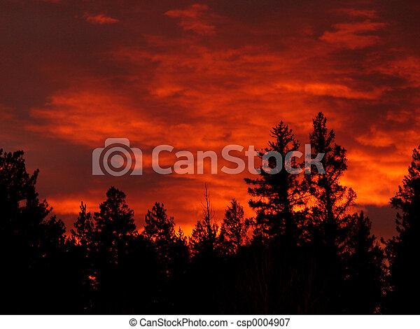 Burning Forest - csp0004907