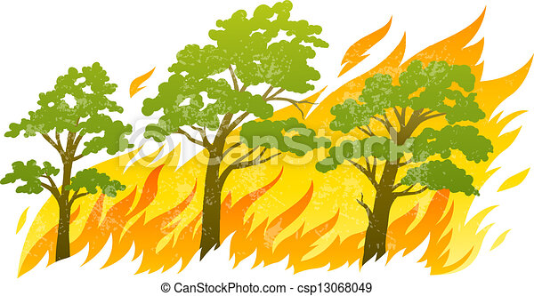 burning forest trees in fire flames - csp13068049