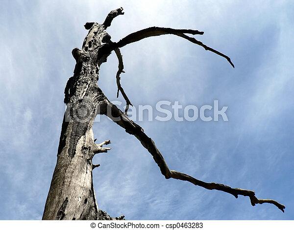 Burnt Tree 01 - csp0463283
