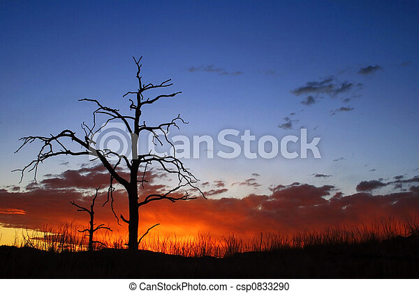 Burnt Tree at Sunset - csp0833290