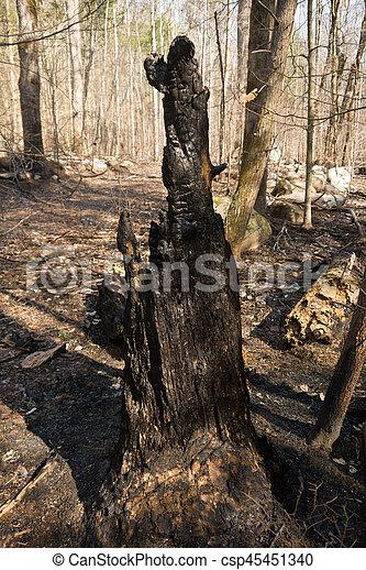 Burnt Tree - csp45451340
