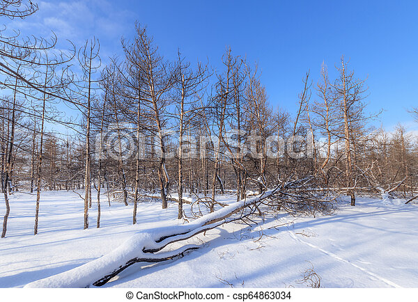 burnt trees in fire - csp64863034