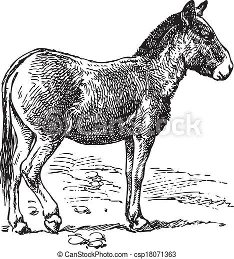 Clip art vectorial de burro  Ancient grabado de un burro