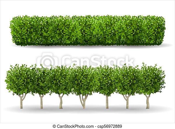 Bush in Form einer grünen Hecke - csp56972889